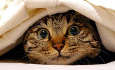 gatti-spaventati